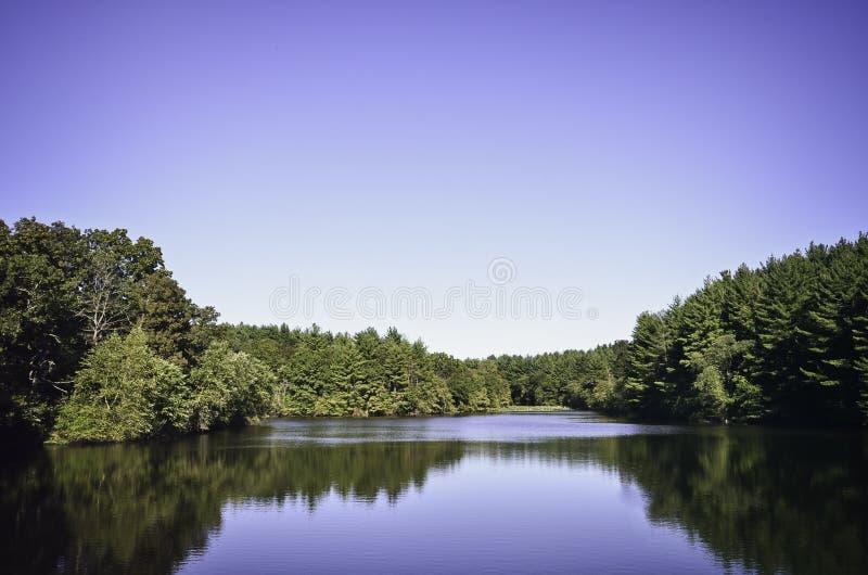 Bosque de Shimek foto de archivo libre de regalías