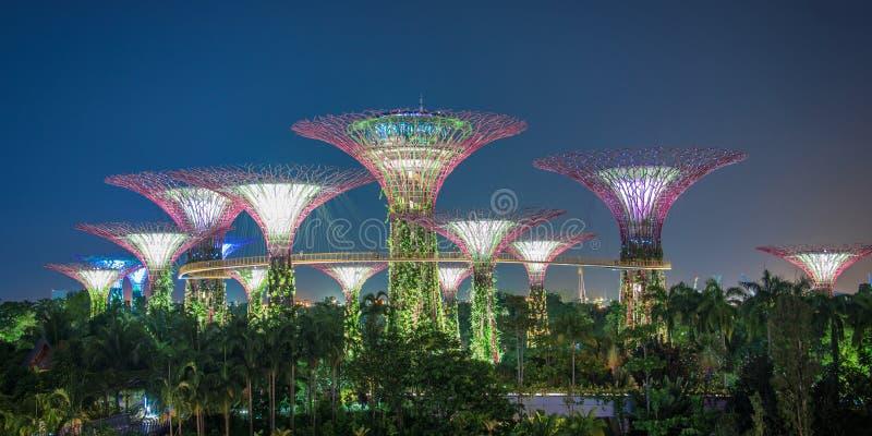 Bosque de Supertree em Singapura fotografia de stock