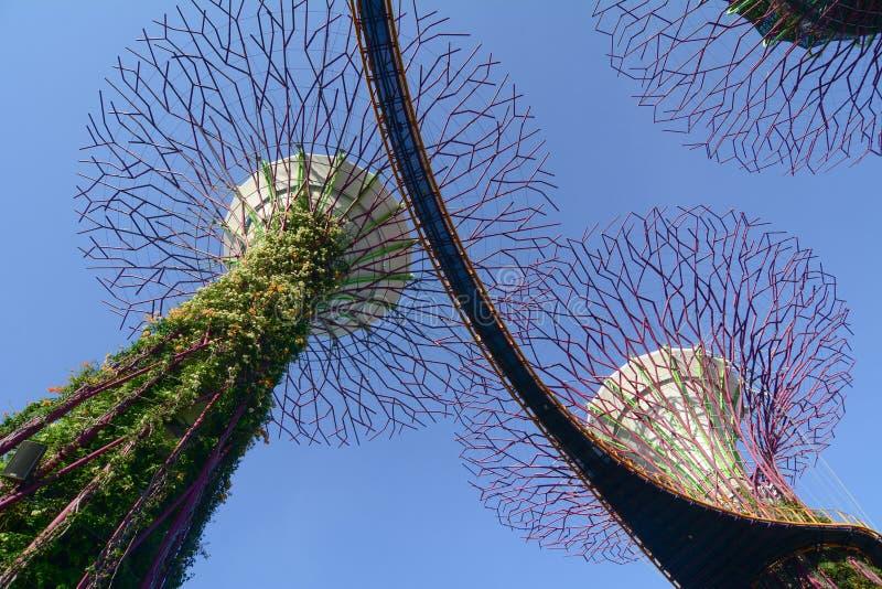 Bosque de Supertree em Singapura foto de stock