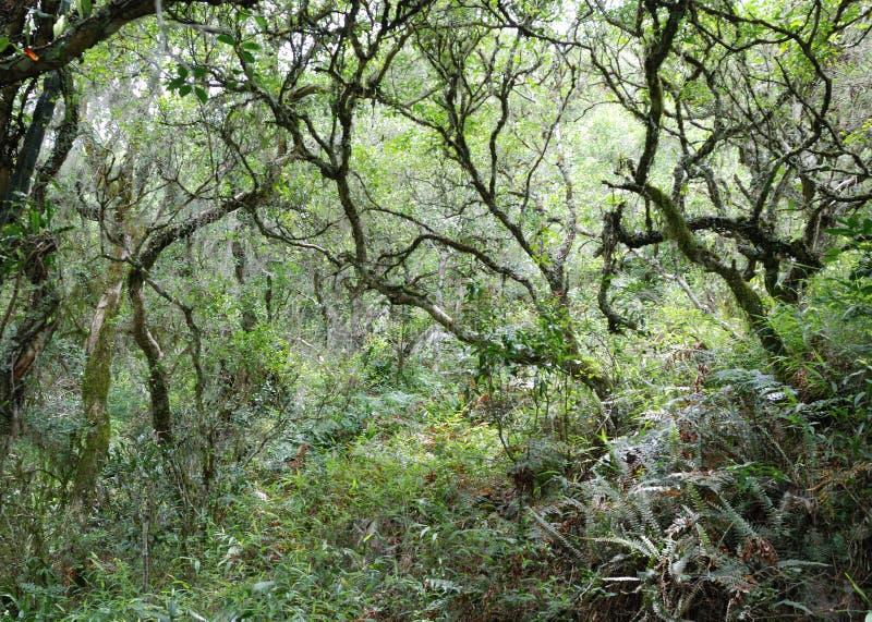Bosque de Sutropical imagenes de archivo