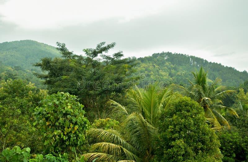 Bosque de Teopical fotografía de archivo