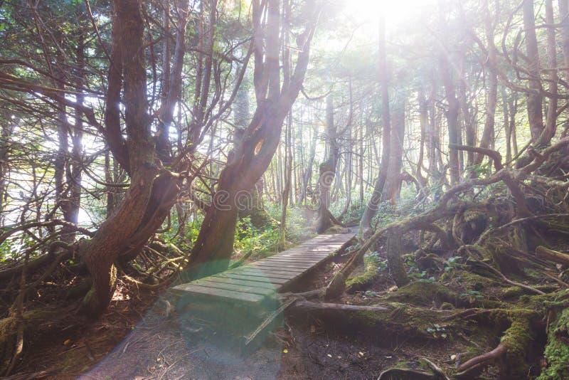 Bosque de Vancouver imagen de archivo libre de regalías