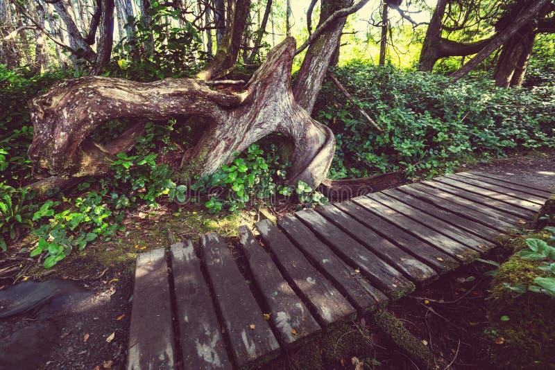 Bosque de Vancouver imágenes de archivo libres de regalías