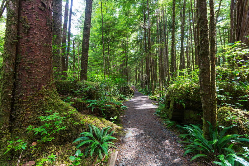 Bosque de Vancouver imagen de archivo