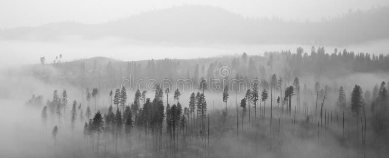 Bosque de Yosemite en nubes fotografía de archivo libre de regalías