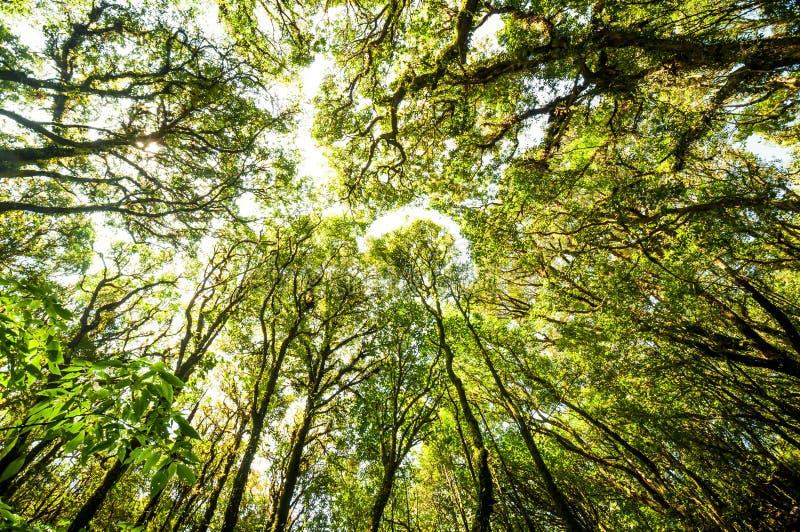 Bosque del rbol de hoja perenne de la colina imagen de for Arboles de hoja perenne limpios