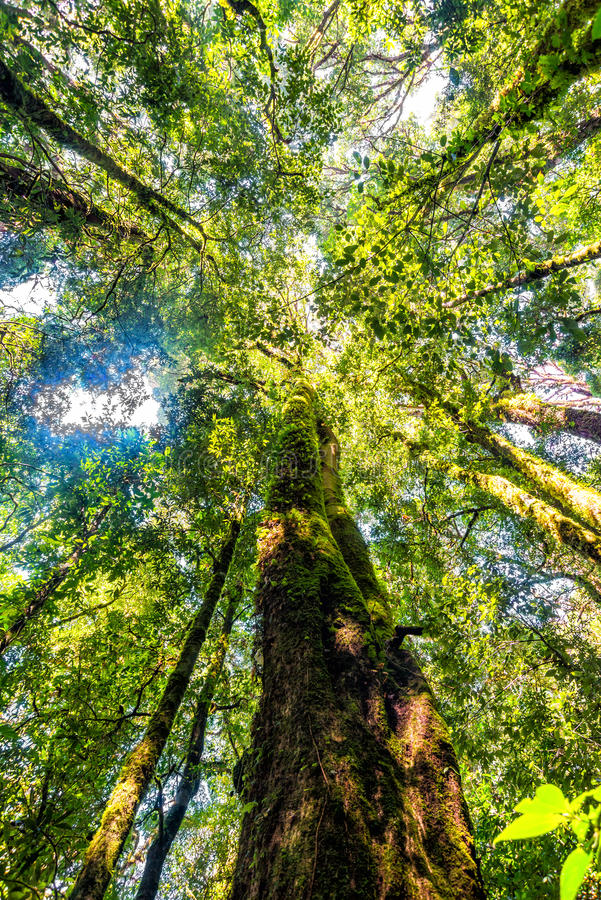 Bosque del árbol en la estación del otoño de Tailandia fotografía de archivo