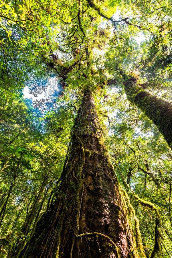 Bosque del árbol en la estación del otoño de Tailandia foto de archivo