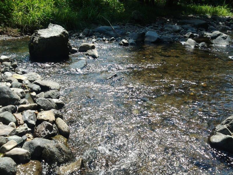 Bosque del arroyo fotografía de archivo libre de regalías
