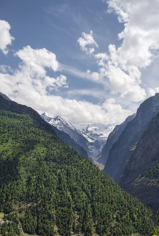 Bosque del barranco en cuesta y el glaciar imagen de archivo