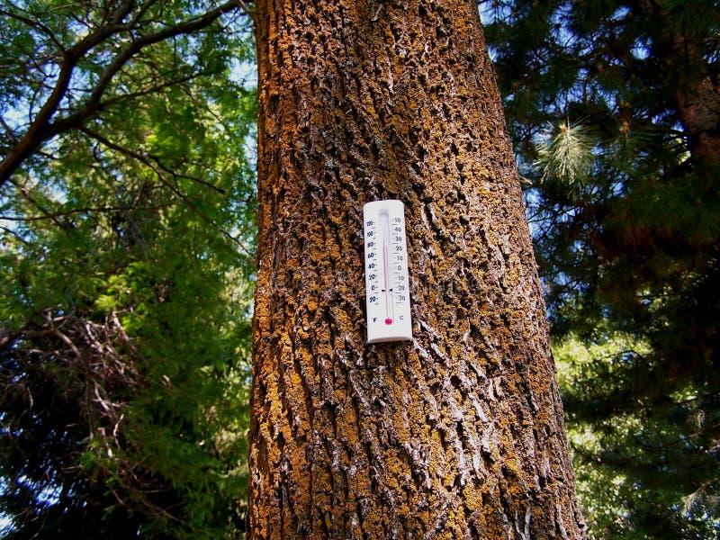 Bosque del calentamiento del planeta foto de archivo