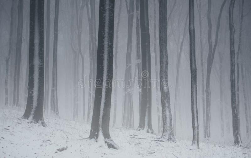 Bosque del cuento de hadas del invierno el día de la Navidad foto de archivo