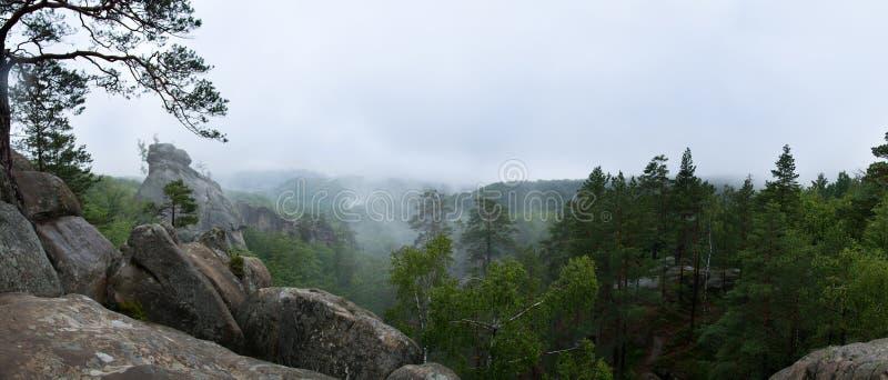 Bosque del desierto en la niebla y la lluvia, visión panorámica imagenes de archivo
