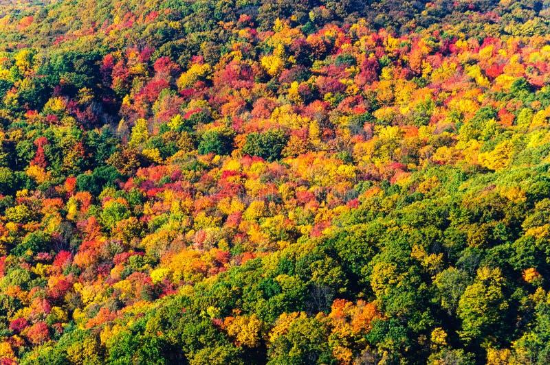 Bosque del Estado de Allegheny imágenes de archivo libres de regalías