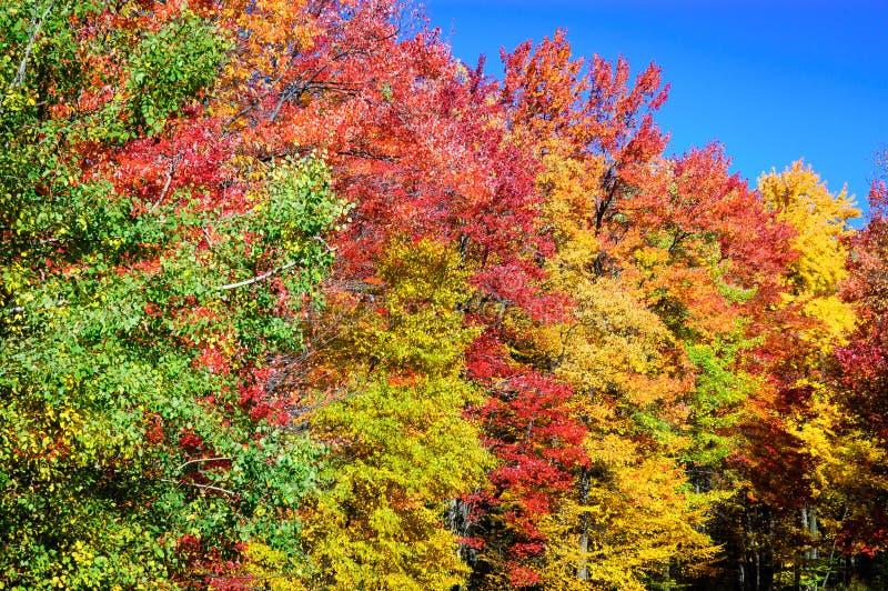 Bosque del Estado de Allegheny imagen de archivo
