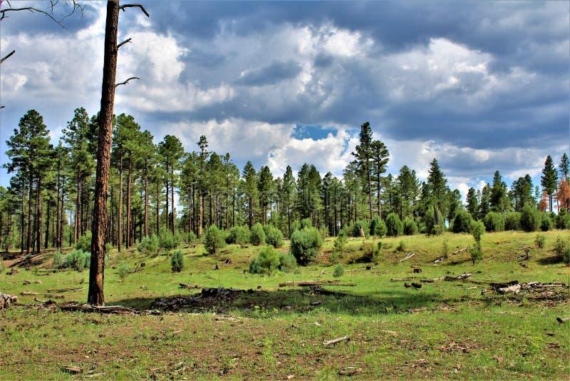 Bosque del Estado de Apache-Sitgreaves, Forest Service Road 51, Arizona, Estados Unidos fotografía de archivo libre de regalías