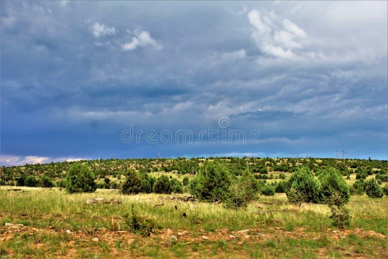 Bosque del Estado de Apache-Sitgreaves, Forest Service Road 51, Arizona, Estados Unidos fotos de archivo