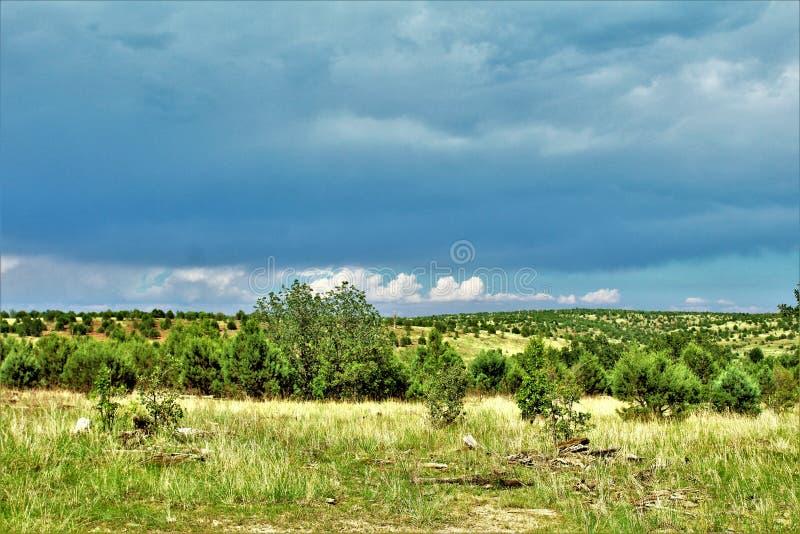 Bosque del Estado de Apache-Sitgreaves, Forest Service Road 51, Arizona, Estados Unidos foto de archivo libre de regalías