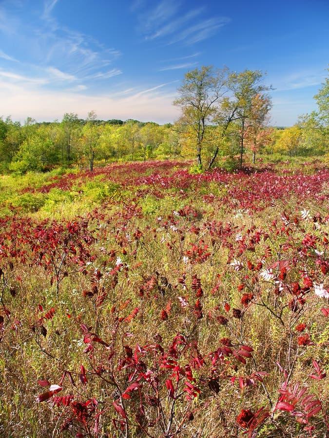 Bosque del estado de la moraine de la caldera fotos de archivo
