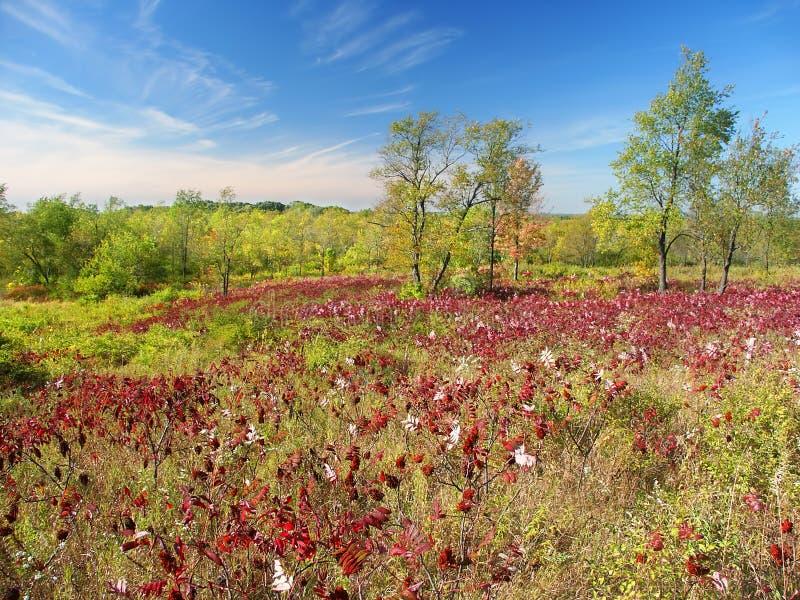 Bosque del estado de la moraine de la caldera foto de archivo libre de regalías