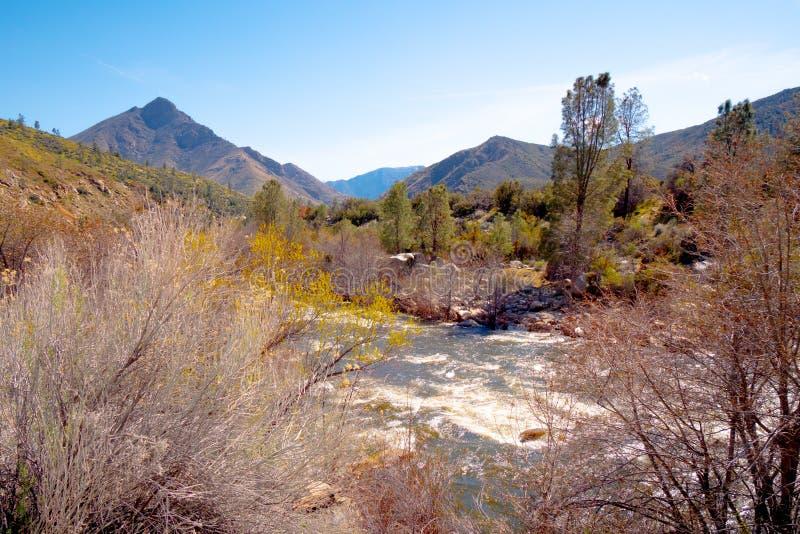 Bosque del Estado de la secoya que sorprende en California fotos de archivo libres de regalías