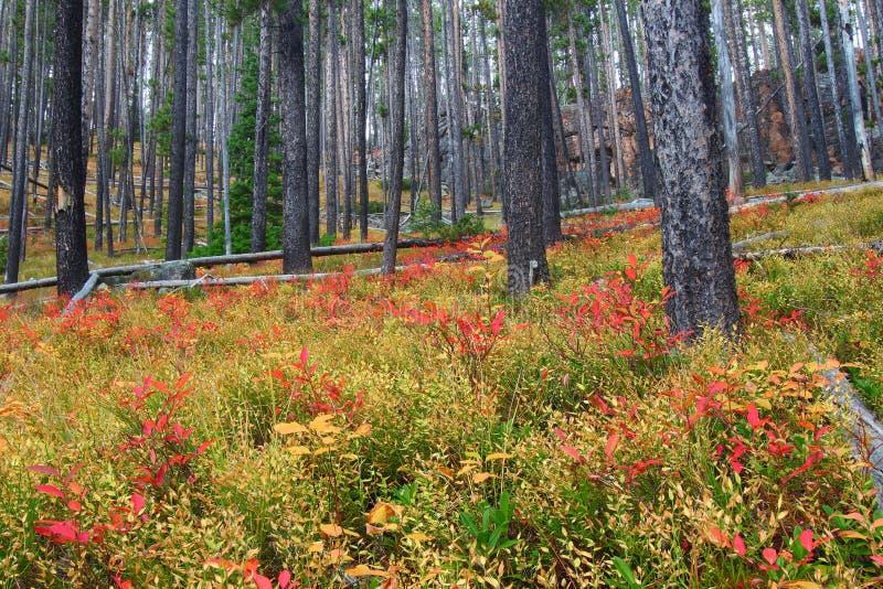 Bosque del Estado de Lewis y de Clark - Montana foto de archivo