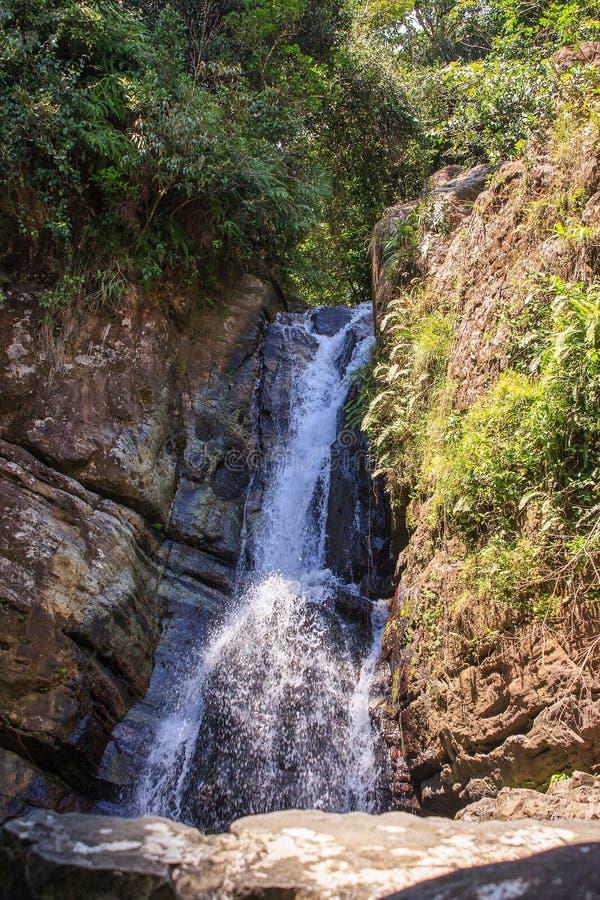 Bosque del Estado del yunque del EL, Puerto Rico imagen de archivo libre de regalías