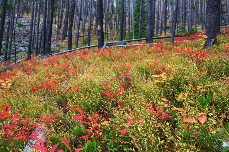Bosque del Estado Montana de Lewis y de Clark foto de archivo