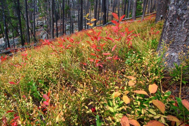 Bosque del Estado Montana de Lewis y de Clark imagen de archivo libre de regalías