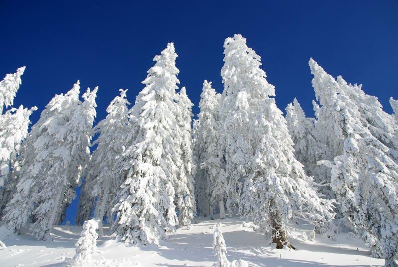 Download Bosque del invierno foto de archivo. Imagen de travieso - 17496818