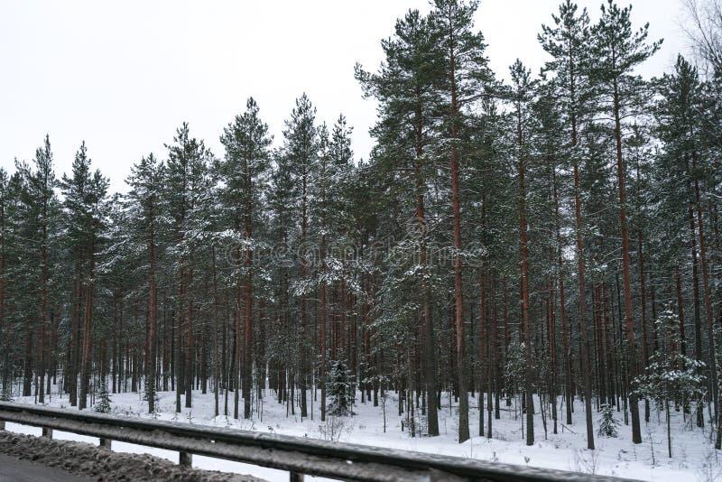 Bosque del invierno cerca del camino por completo de la nieve imagen de archivo libre de regalías