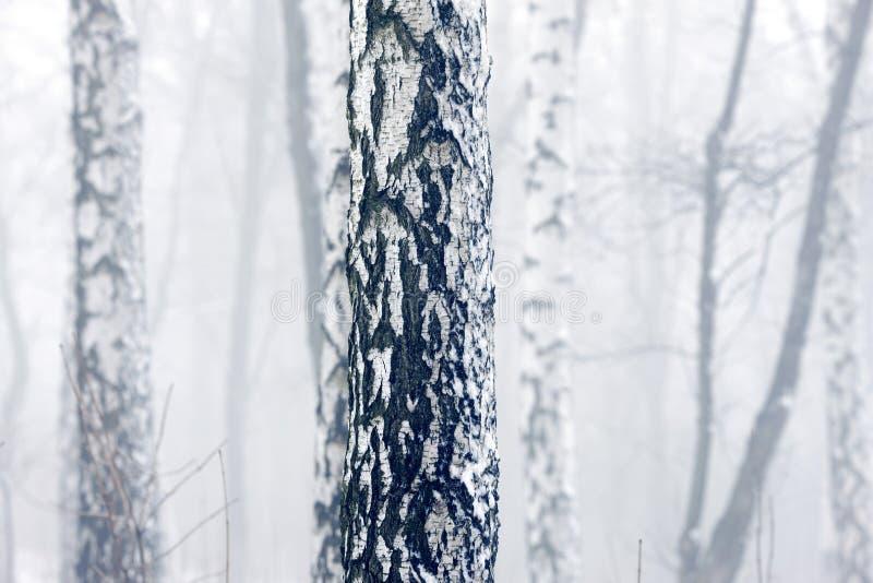 Bosque del invierno con helada y nieve en niebla gruesa imágenes de archivo libres de regalías