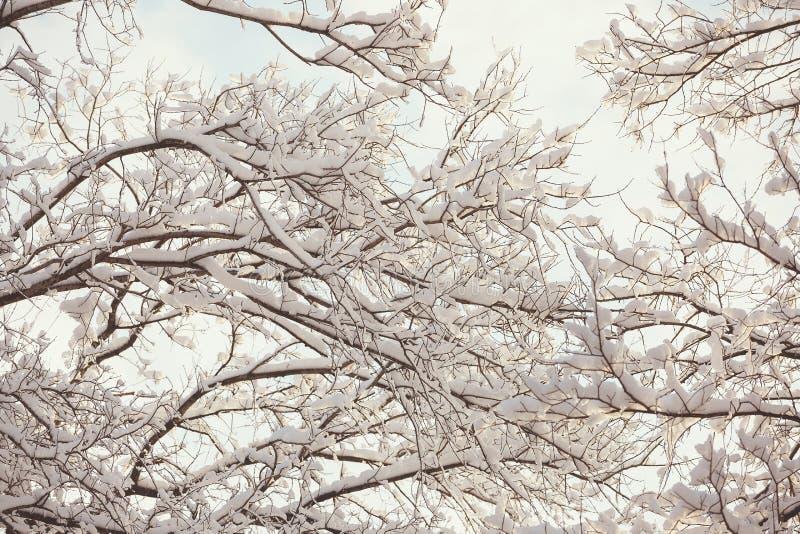 Bosque del invierno con las ramas nevadas imagen de archivo libre de regalías
