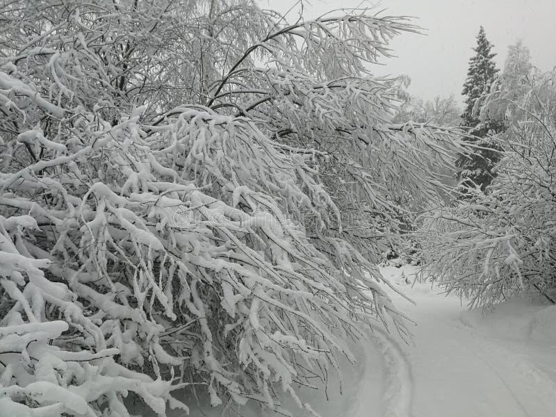 Bosque del invierno con nevadas fuertes imagen de archivo