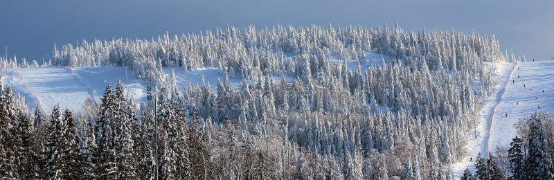 Bosque del invierno de la montaña fotografía de archivo