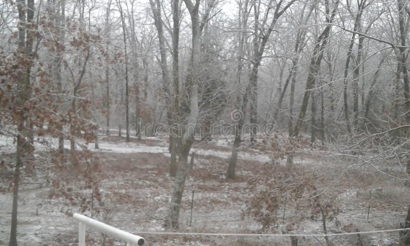 Bosque del invierno de Ozark fotos de archivo