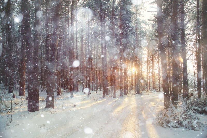 Bosque del invierno del fondo fotos de archivo libres de regalías