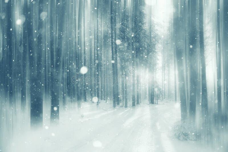 Bosque del invierno del fondo fotos de archivo