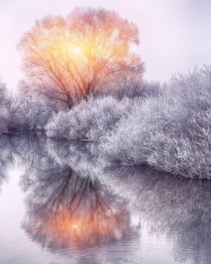 Bosque del invierno en el río en la puesta del sol imagen de archivo libre de regalías