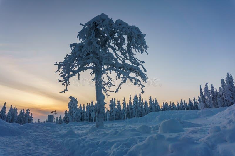 Bosque del invierno en Finlandia septentrional fotografía de archivo libre de regalías