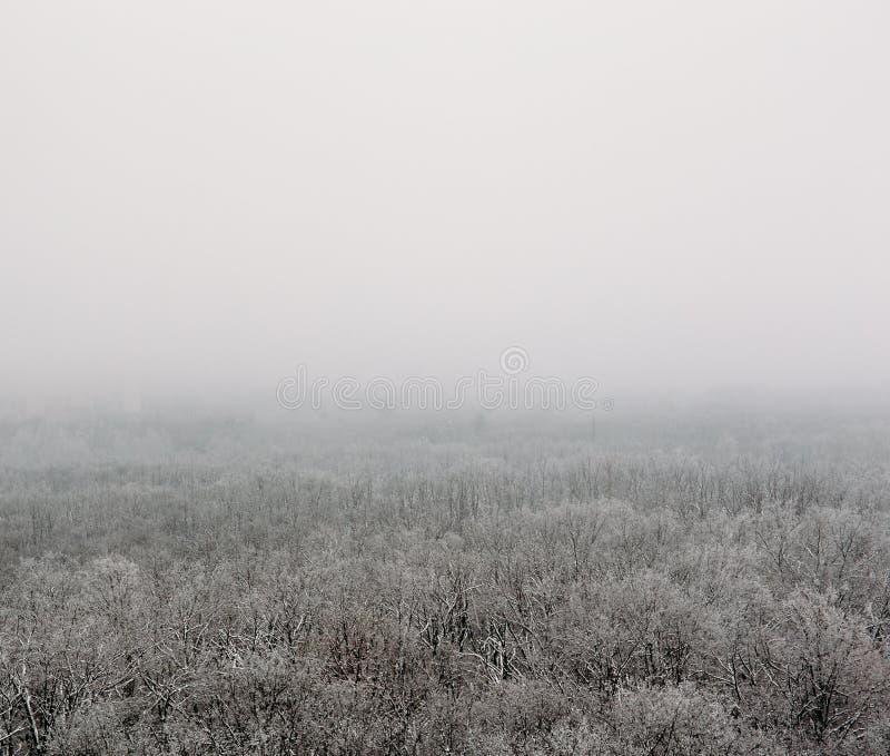 Bosque del invierno en la niebla o el myst, visión aérea Paisaje, helada y tranquilidad blancos de la naturaleza imagen de archivo