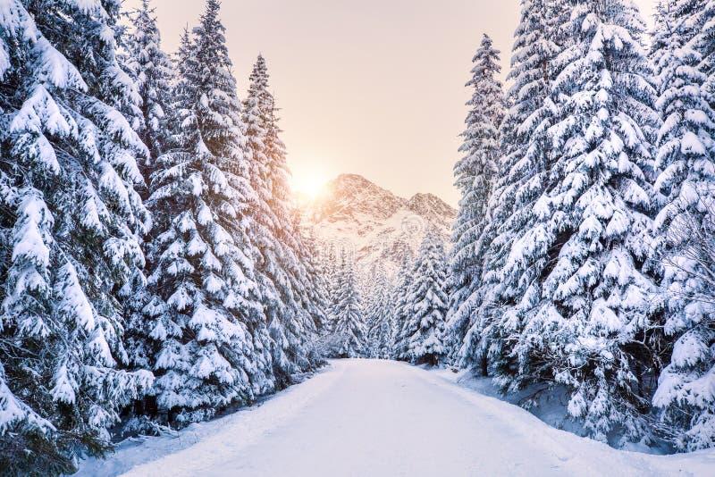 Bosque del invierno en montañas en la salida del sol foto de archivo libre de regalías