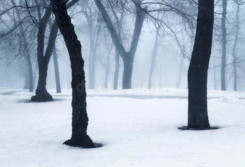 Bosque del invierno en niebla Árboles de niebla por la mañana fría fotos de archivo