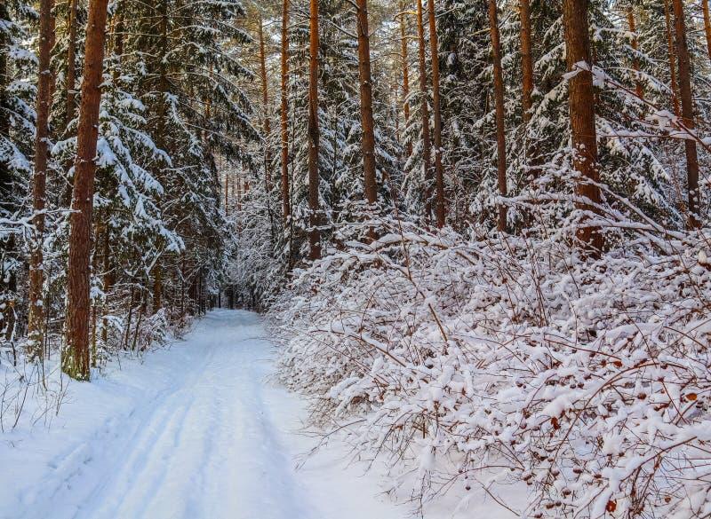 Bosque del invierno Nevado en un día soleado Camino blanco como la nieve con una pista del esquí Árboles y arbustos nevados foto de archivo