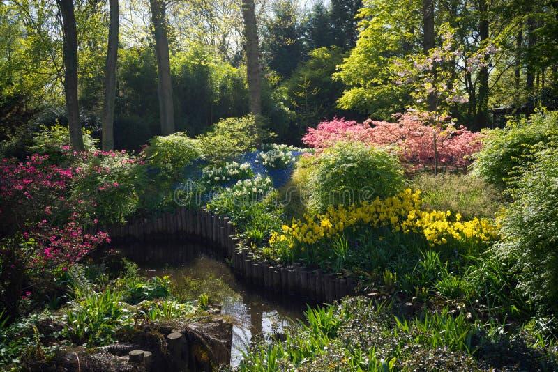 Bosque 1 del jardín de la primavera imagen de archivo