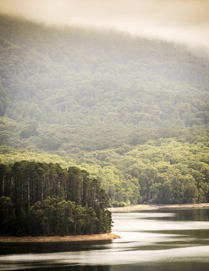 Bosque del lago imagen de archivo