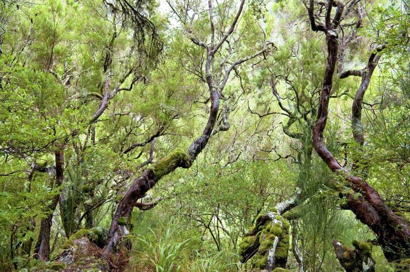 Bosque del laurel en Madeira imagen de archivo libre de regalías