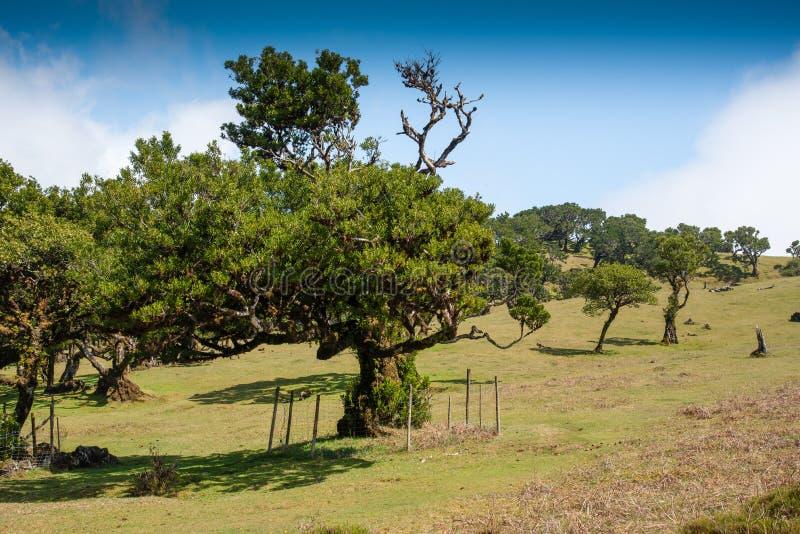 Bosque del laurel en Madeira foto de archivo