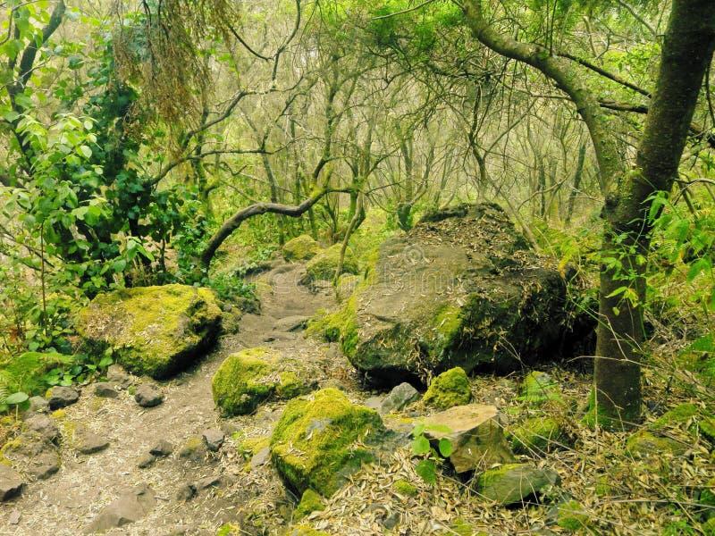 Bosque del Los Tilos, La Palma imagen de archivo libre de regalías
