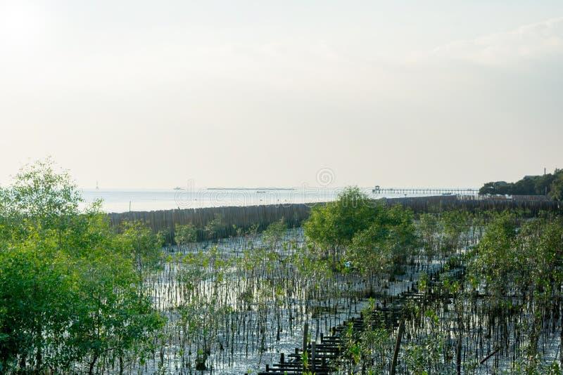 Bosque del mangle en el centro de ocio de la PU de la explosión fotos de archivo